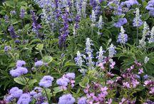 Tuinen, bloemen en boeketten / Inspirerende combinaties