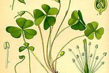 Herbals / by Veronica Hester