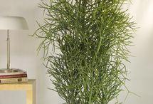 Things Euphorbaceae, the Spurge family