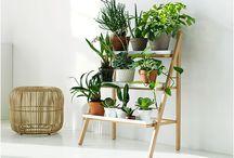 Planter i heimen