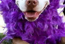 Pets Go Purple 2 End Alz