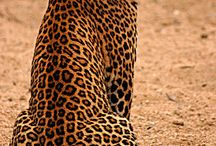 Leopards, Cheetahs and Jaguars ARE DIFFRENT / Cute and cool pics of big cats