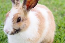 Lab - News / Laboratory Animal News