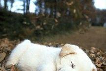 hi!, my name is dog
