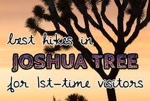 Must Visit!