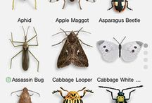 Bugs: Insects, Good & Bad / Bugs, Insect Pests of Home, Lawn, Landscape & Gardens, plus Beneficial Insects of the Garden.