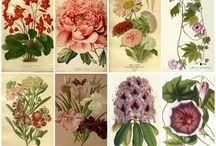 virág képeslap / flower postcards Vintage colorful transzfer transfer