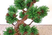 Drzewka Bonsaj