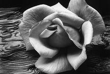 Black & White Inspiration