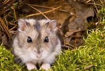 In loving memory of Bismarck / My hamster Bismarck died today  / by Katie