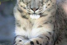 Stunning Animals photos