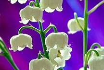 In my Garden / I have posted plants that are growing I my borders and beds on Jonquil Place.  / by Bronwynne Bailey