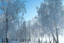 """""""Winter Wonderland"""" / Feel free to pin any photos which shows the beauty of the cold season. If you want to be invited just follow the board or comment ADD ME on one of the ADD ME Pins."""