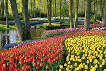 Gardens, Parks: Europe