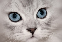 All God's Critters - Kitties/Beautiful / by Kay Hough