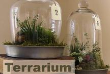 Terrarium Infatuation / All terrariums, all the time