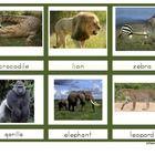 Preschool - Safari theme