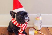 vianocny bulldog