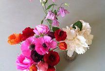 Florescultura