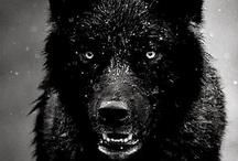Black !