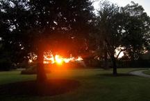 Sunset at Williamstown Botanic Gardens