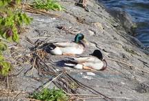 Birdwatching 2012
