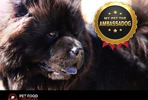 Ambassadog / Our competition winners!