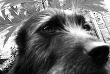 Puppy Dogs / by Romany Soup