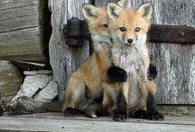 Foxy!!!