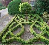 Hedge design