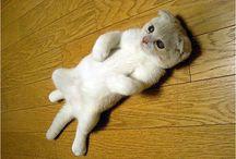 Teneri gattini / Buffi, dispettosi e molto coccolosi...