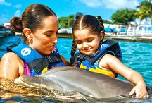Tours in Cancun / Meet the best tours & excursions in Cancun, Mexico.