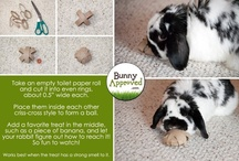 RABBIT CARE / how to care for your pet rabbit