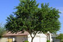 Waterwise Trees - Los Angeles