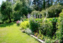 Minun puutarhani / My garden / Pihaltani löytyy vanhoja omenapuita, paljon perennoja ja pieni kasvimaa laatikoissa.