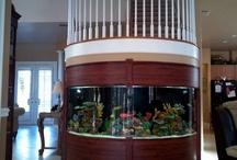 Salt water fish tanks / by Cheryl Yacovoni
