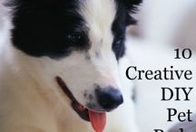 Pets / Cats and Dogs and the critters we keep to warm our hearts. Post up to 5 pins per day. To join this board follow http://www.pinterest.com/UntrainedHW and then request access on the Group Boards board http://www.pinterest.com/untrainedhw/group-boards-for-untrained-housewife/ / by Untrained Housewife