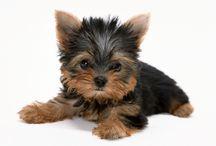 PIESKI / I LOVE DOGS