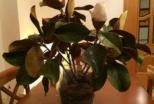 Decorar con Ramos / Los ramos de mi casa