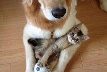 Hund,Katze,Maus und co