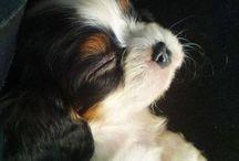 Puppy Love!!!!!