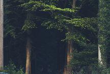 Skog och natur