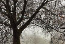 parki w Londynie / Greenwich park, St. Jame's park, Hyde...