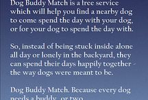 What is Dog Buddy Match? / What Dog Buddy Match offers and how it works.