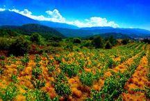 Nos Wine Safari dans les plus beaux vignobles du Sud