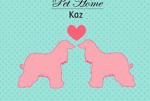 Pet Home Kaz / Hospedagem para cães