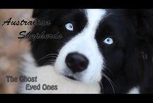 Dog Breeds: Aussie