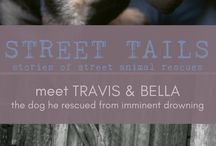 Street Tails | Animal Rescue Stories / Stories of animal rescues and street dogs adoptions. We meet so many travelers who have taken dogs home with them, and we share their stories in a series called Street Tails.