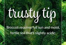 Gardening Trusty Tips