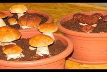 Выращивание зелени и грибов дома